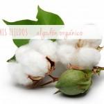 El algodón orgánico/ Organic cotton