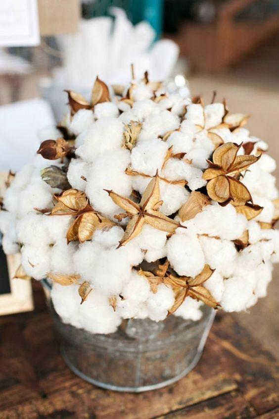 ramo-algodón